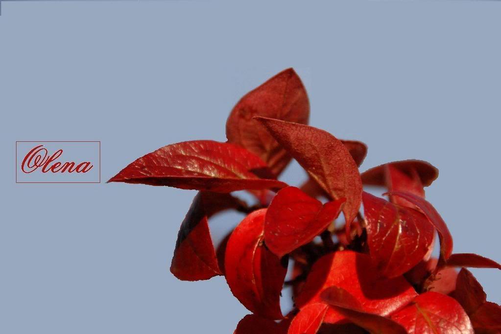 Volim crveno - Page 4 Crveno