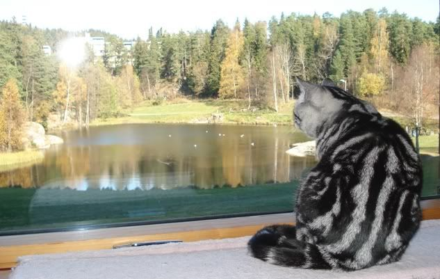Cattery fro Norway 5017