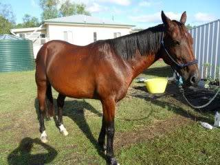 "Horse Available for Adoption - ""Spud"" Spud"
