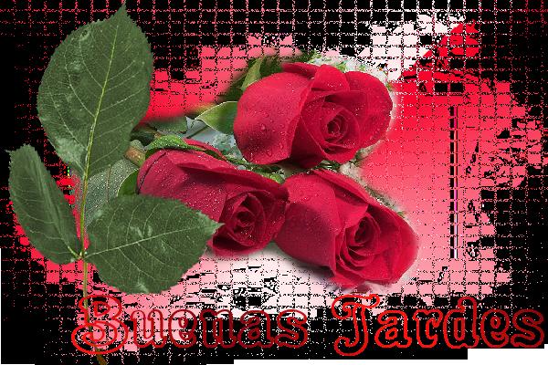 Buenos Días, Tardes, Noches NOVIEMBRE 2014 Rosa