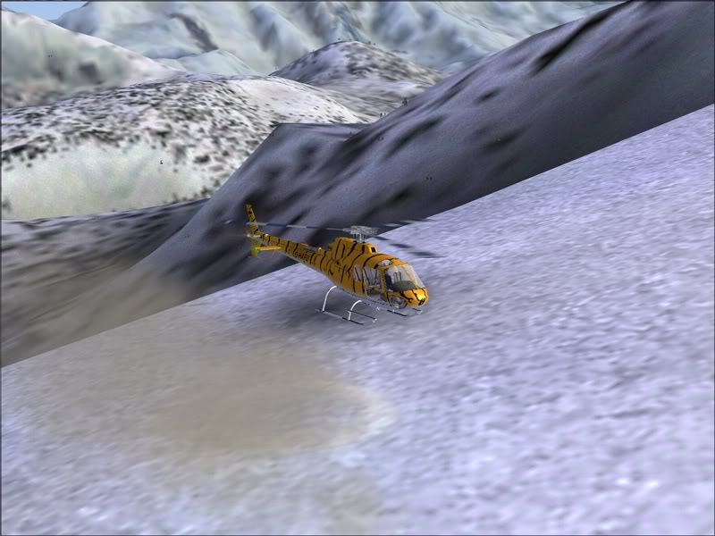 [Fs9]Esquiando com tigre de bengala 019