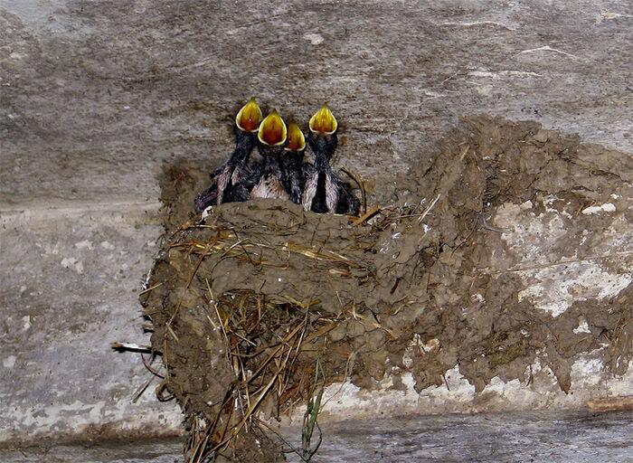 Conseils pour recueillir un oiseau blessé, tombé du nid ... Photofabcanoneos243