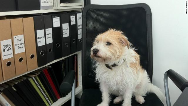 Dog in news story 120712020106-rttt-office-dog-tiger-horizontal-gallery