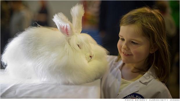 Pildimäng (tähtajatu) - Page 13 131129123521-angora-rabbit-620xa