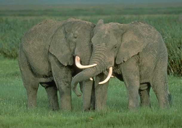 ...EQUILIBRIO... Elefantes-610x430