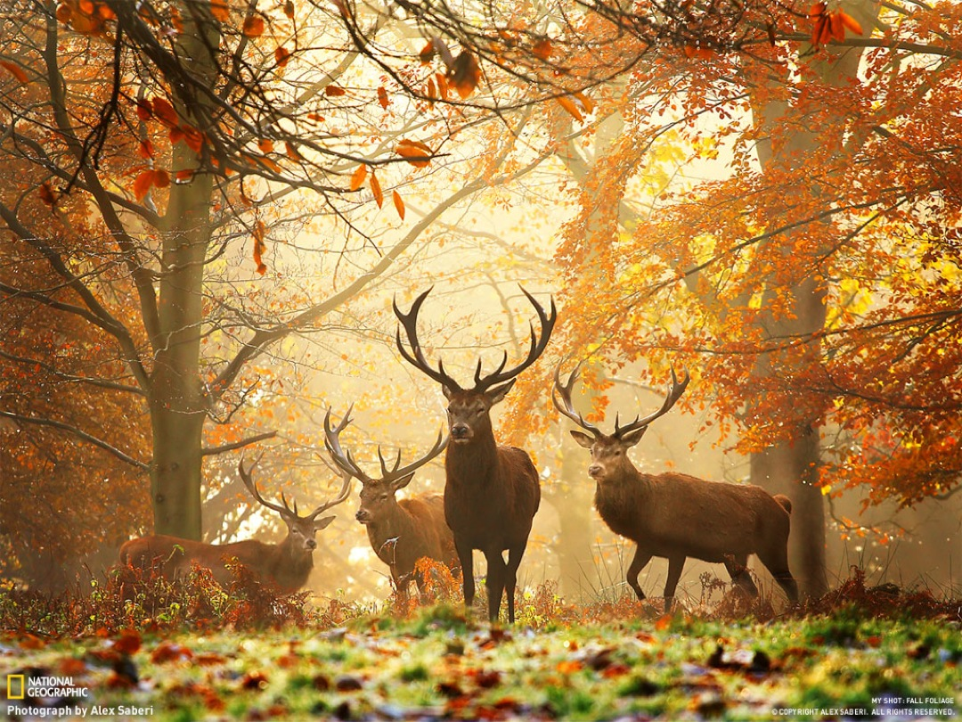 Empieza el otoño. - Página 3 _paisajes-de-otono-10-67a35e50-4512-1030-91f2-0019b9d5c8df