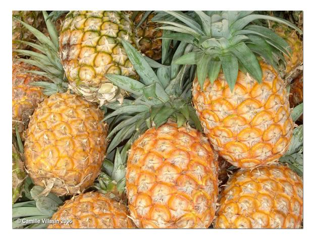 Selling Pineapples 06_pineapple