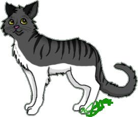Random cat! Graycat2-1