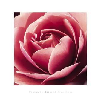 غٌفٍۈة [• َقِلـمٍ •] .، خٍطَهُـآ إ [• حِ ـلـمٍ ~ ! .. Calvert-rosemarie-pink-rose-8401023