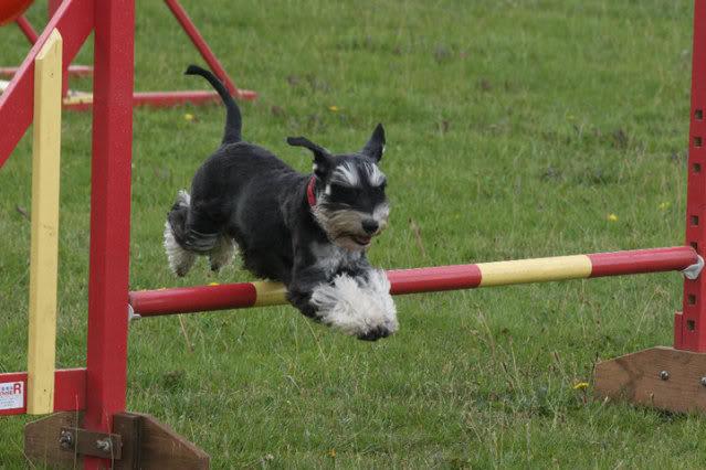 Our agility photos Graceagility1-1
