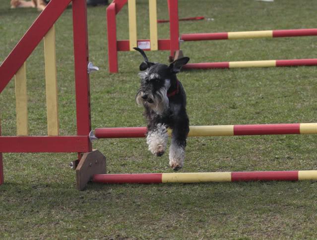 Our agility photos Graceagility1