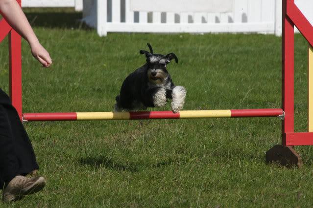 Our agility photos Graceagility2-1