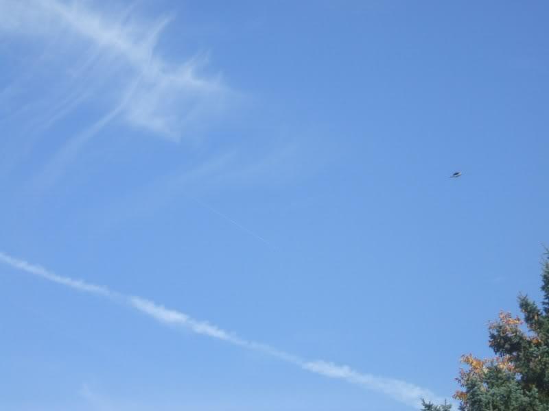UFO Captured in Photo I took. DSCF1956