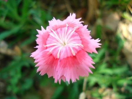 Some Flowers DSC01857