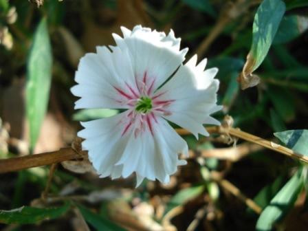 Some Flowers DSC01860