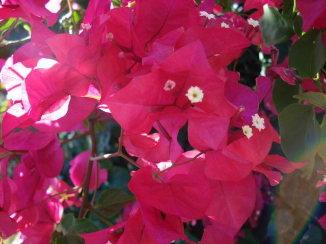 Some Flowers DSC02751