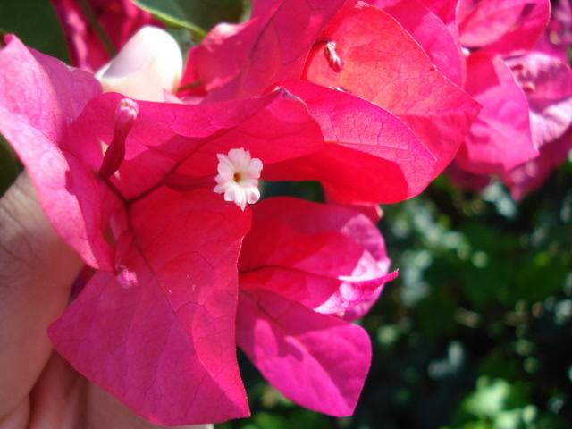 Some Flowers DSC02773