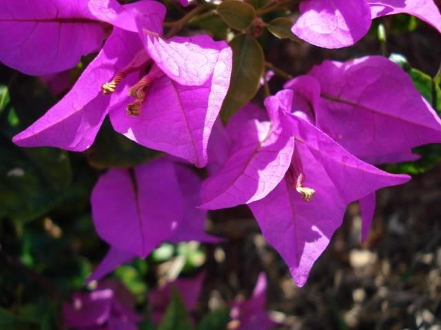 Some Flowers DSC02775