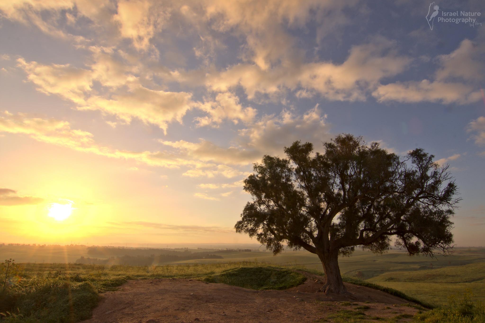 Πες μας τα όλα με μια φωτό... - Σελίδα 4 Sweet-sunrise