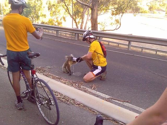 thread sull'AMICIZIA tra specie diverse Koala2