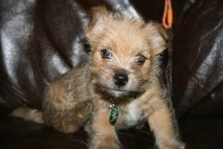 My new puppy :) :) :) Apix