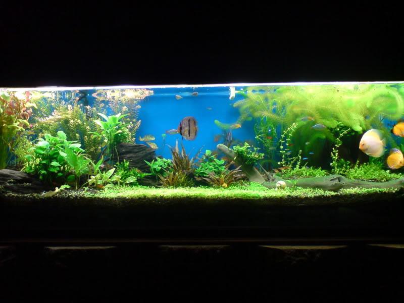 aquarium 840 L de Mario Molina/  acuario 840 L de Mario Molina, Costa Rica DSC02561