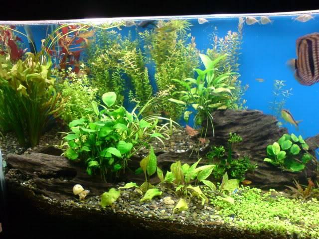 aquarium 840 L de Mario Molina/  acuario 840 L de Mario Molina, Costa Rica DSC02432