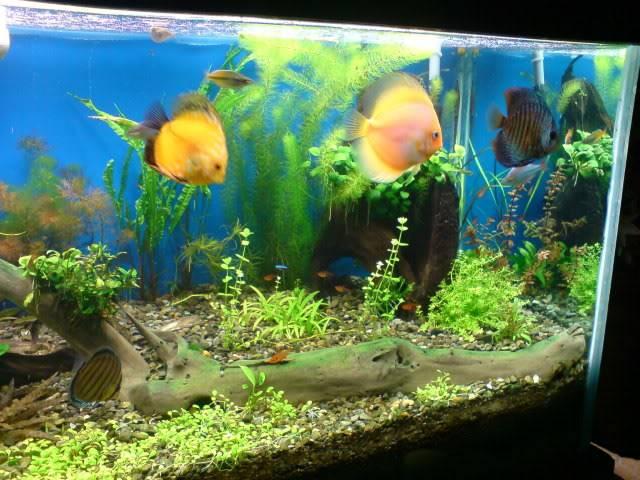 aquarium 840 L de Mario Molina/  acuario 840 L de Mario Molina, Costa Rica DSC02433