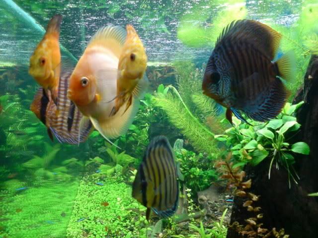 aquarium 840 L de Mario Molina/  acuario 840 L de Mario Molina, Costa Rica DSC02437