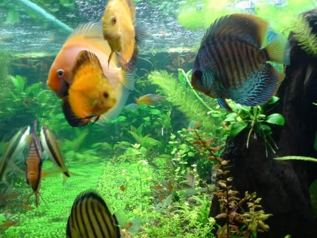 aquarium 840 L de Mario Molina/  acuario 840 L de Mario Molina, Costa Rica DSC02438