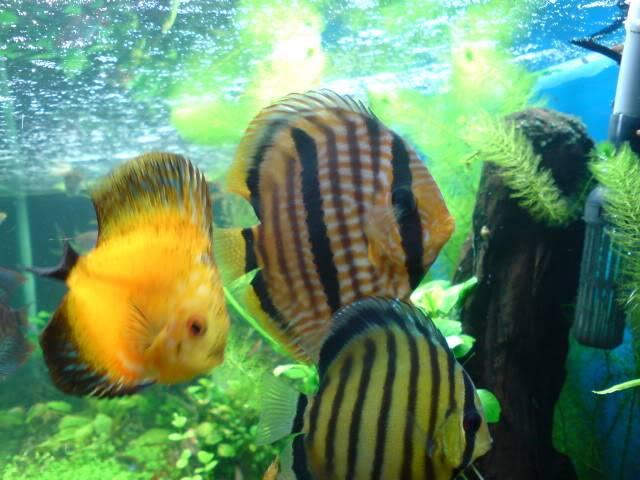 aquarium 840 L de Mario Molina/  acuario 840 L de Mario Molina, Costa Rica DSC02441