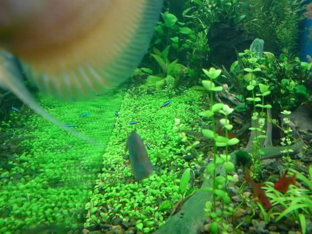 aquarium 840 L de Mario Molina/  acuario 840 L de Mario Molina, Costa Rica DSC02443