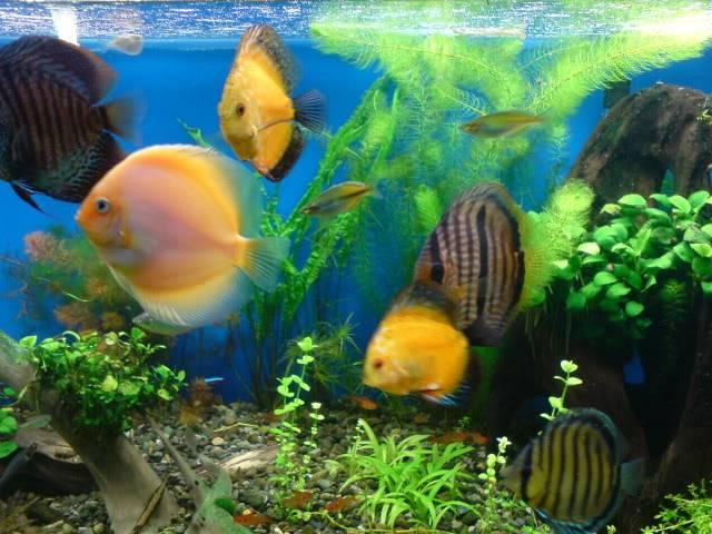 aquarium 840 L de Mario Molina/  acuario 840 L de Mario Molina, Costa Rica DSC02446