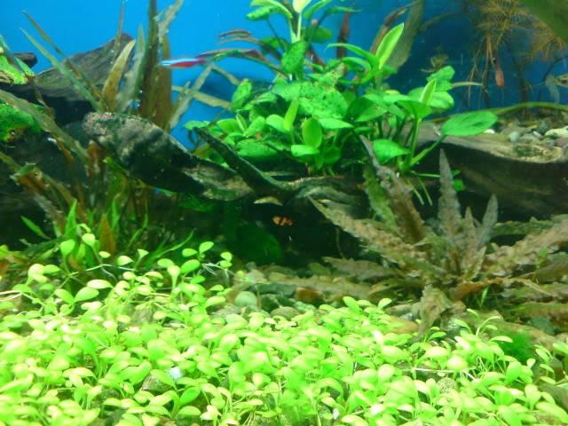 aquarium 840 L de Mario Molina/  acuario 840 L de Mario Molina, Costa Rica DSC02454
