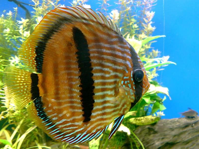 aquarium 840 L de Mario Molina/  acuario 840 L de Mario Molina, Costa Rica DSC02510fixed
