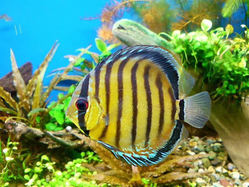 aquarium 840 L de Mario Molina/  acuario 840 L de Mario Molina, Costa Rica DSC02511fixed