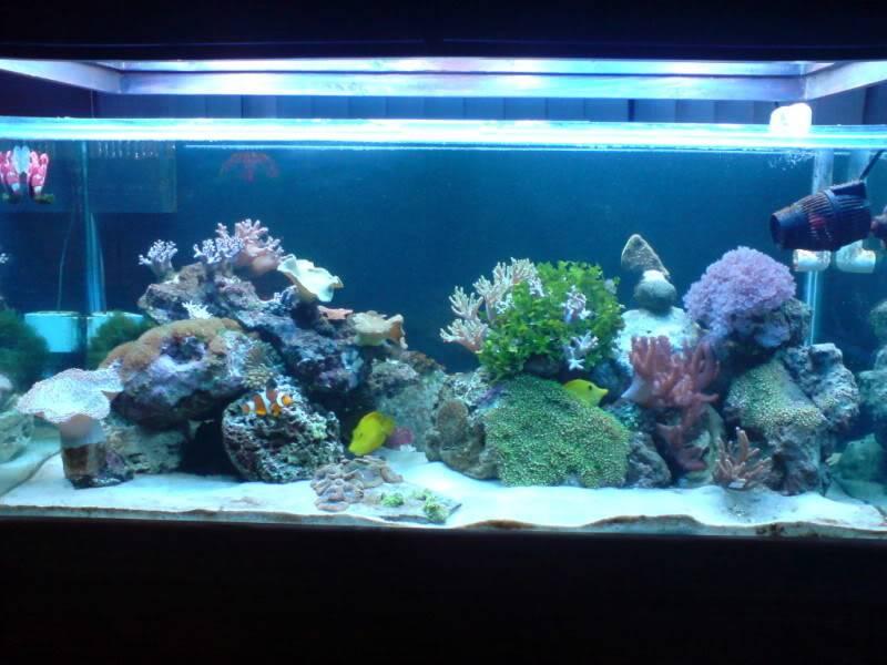 aquarium marin / El acuario marino DSC02530