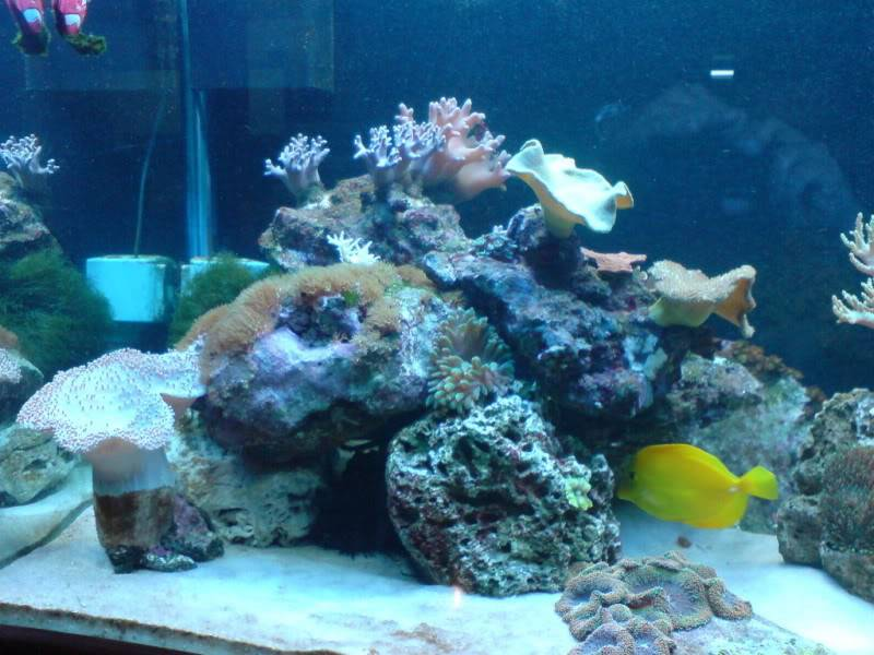 aquarium marin / El acuario marino DSC02531