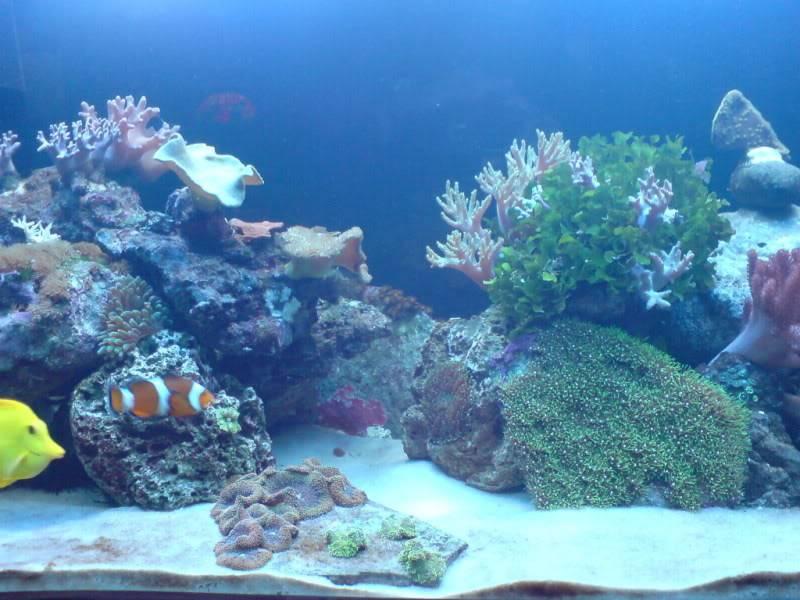 aquarium marin / El acuario marino DSC02532