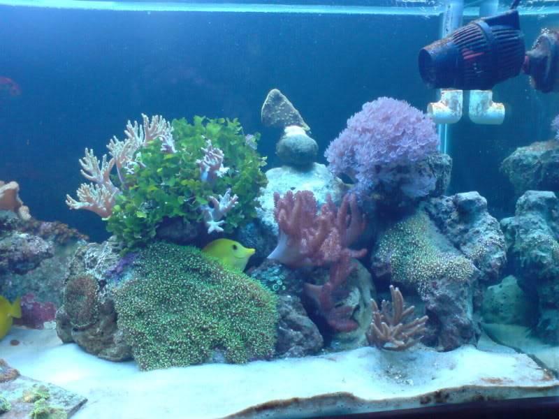 aquarium marin / El acuario marino DSC02533