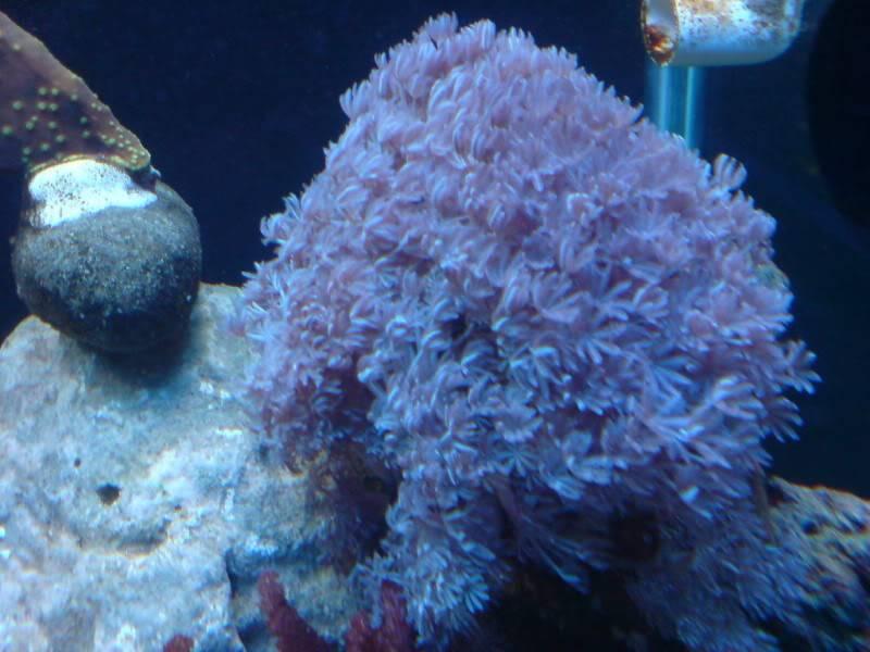 aquarium marin / El acuario marino DSC02534