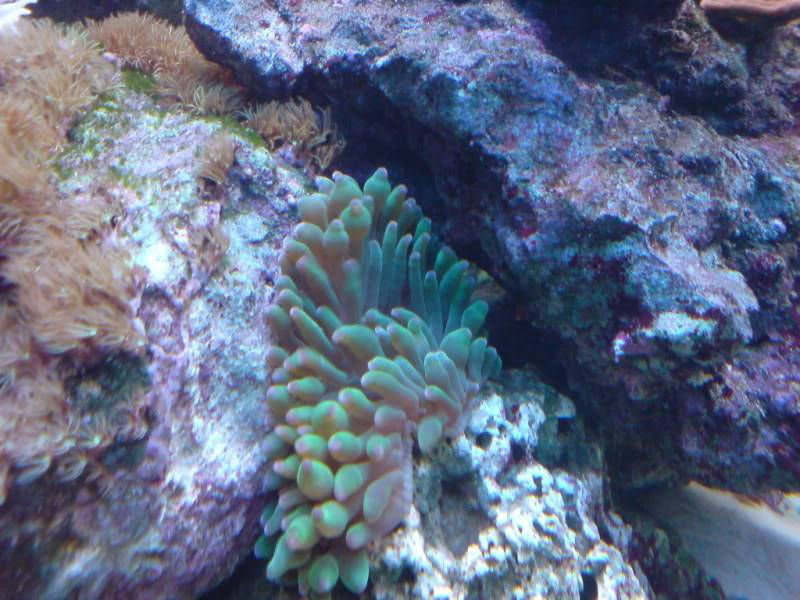 aquarium marin / El acuario marino DSC02542