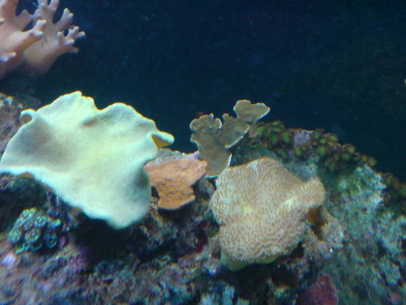 aquarium marin / El acuario marino DSC02543