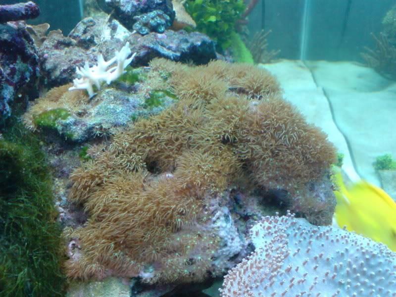 aquarium marin / El acuario marino DSC02546