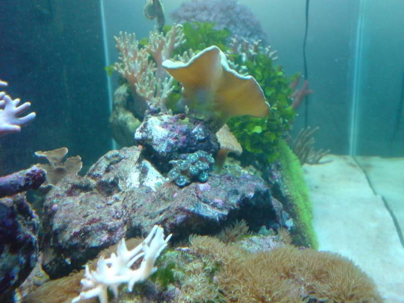 aquarium marin / El acuario marino DSC02547