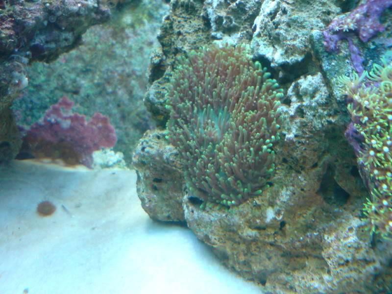 aquarium marin / El acuario marino DSC02549