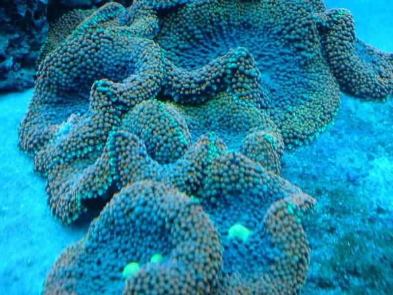aquarium marin / El acuario marino DSC02552