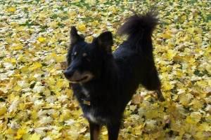 Wuff Like A Dog(Stray dogs)Semlit Accepting 752799_1205389926