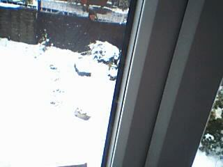 Snow Pictures! Image265