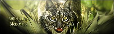 [Votaciones] FDLS #7 Tema: Animales Firmalince